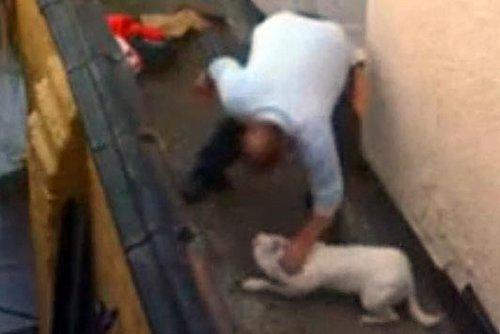 邻居拍到道奇的主人在用拳头猛打它的面部。