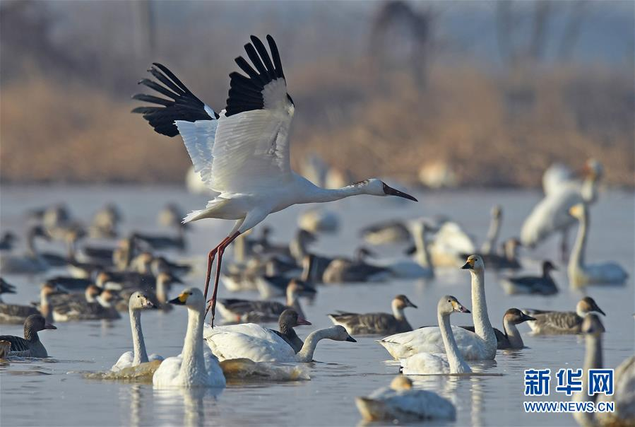 (环境)(4)鹤舞鄱阳湖