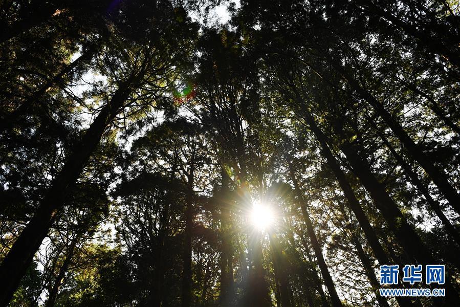 (环境)(5)阿里山秋景如画