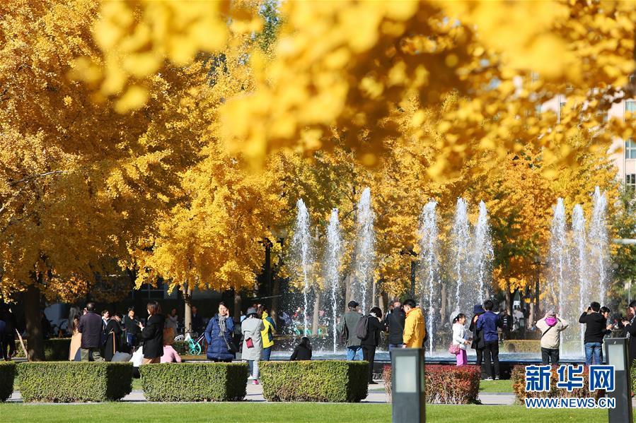 (环境)(2)赏秋清华园