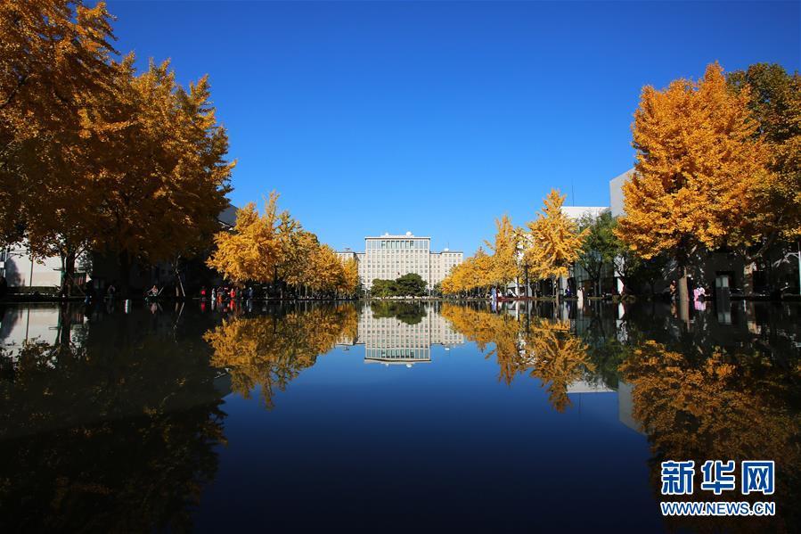 (环境)(4)赏秋清华园