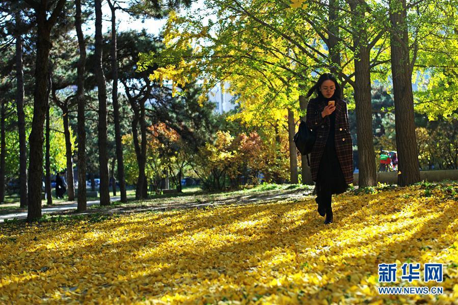 (环境)(7)赏秋清华园