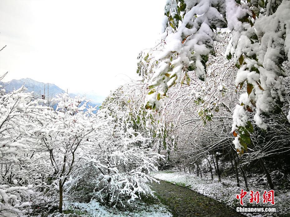 四川什邡山区迎来今冬首场雪 冬日美景宛如童话世界