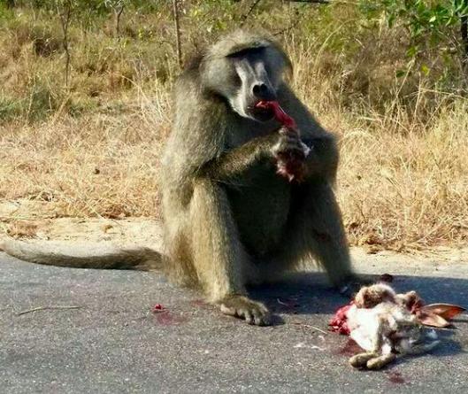 胆小慎入!动物世界:罕见的残酷大餐