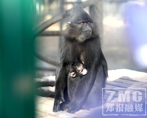 郑州市动物园成功繁衍一批稀有动物